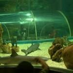 aquarioxinfo